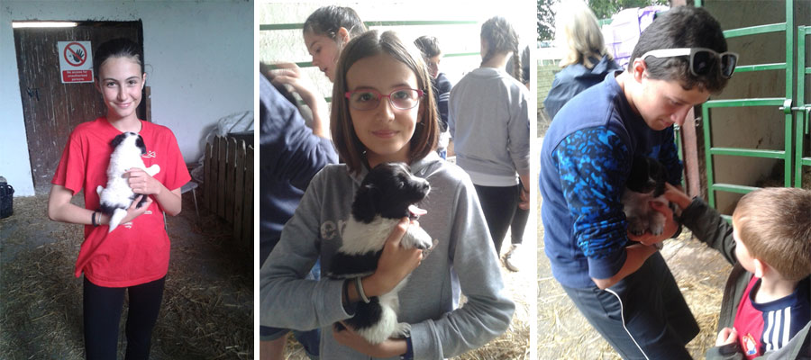 0706-puppies