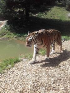 PAULA zoo2